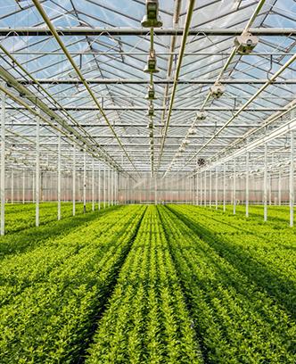 荷蘭平米農業