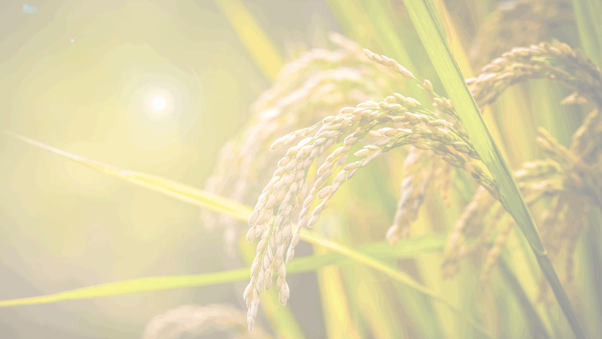 石家莊市藁城區肥沃肥業有限公司
