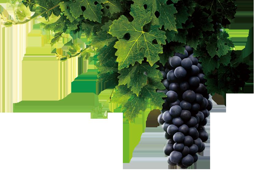 天池葡萄酒