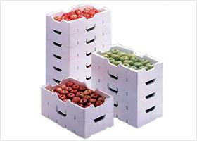 蔬菜水果保鲜箱