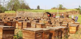 規范蜂廠管理