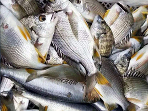 如何辨别鱼饲料