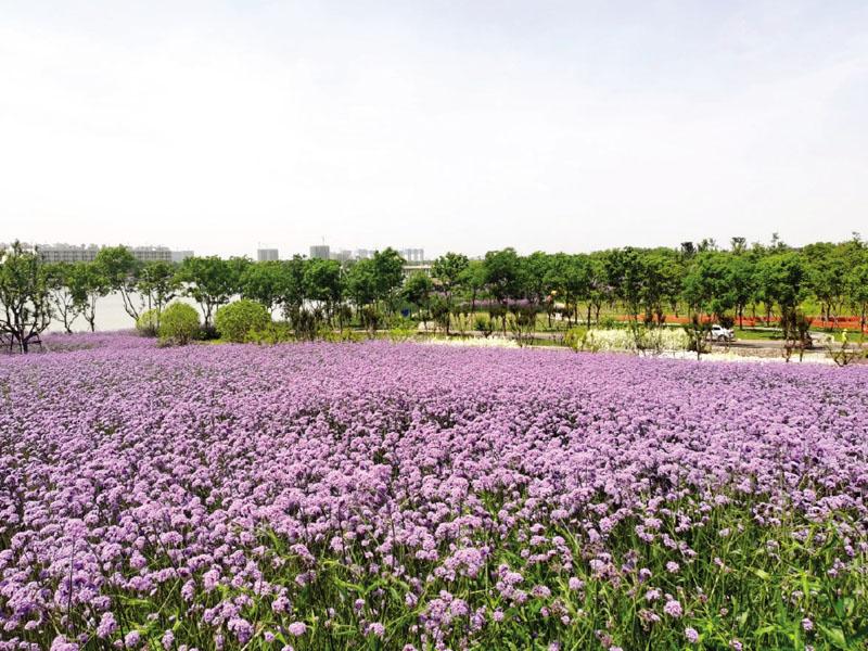 徑河公園景觀工程