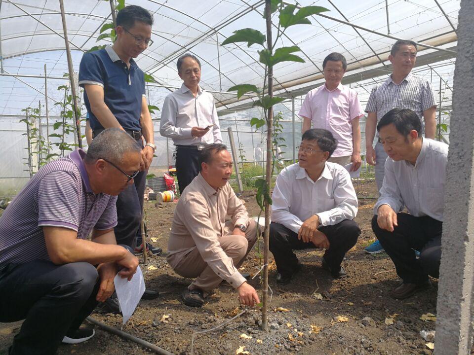 州政協主席陳國芳同誌一行赴安龍縣調研精品果業發展