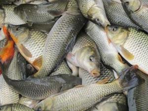 鱼虾膨化饲料投喂方法