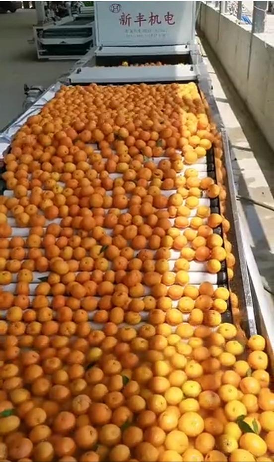 冰糖橙打蠟機