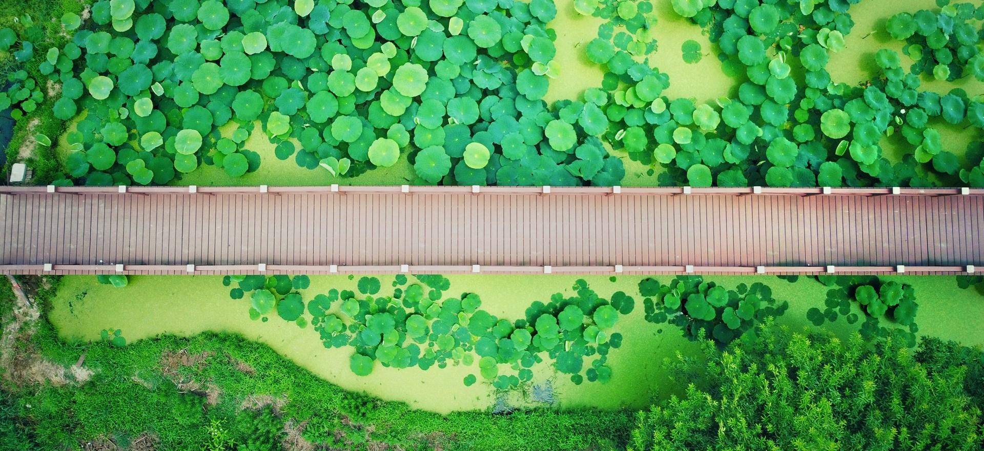 绿色环保,生态木代替原材料