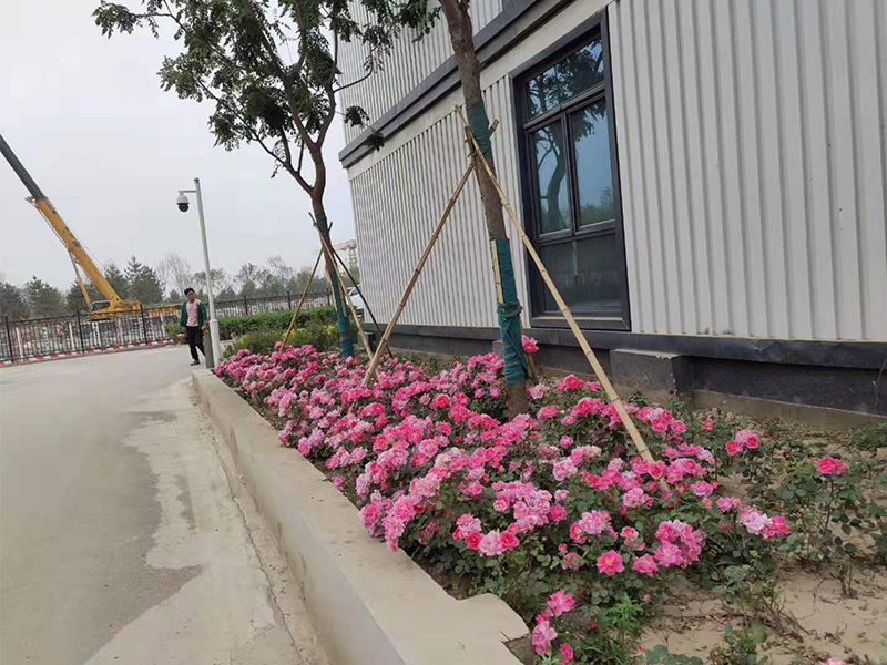 中鐵建工集團-雄安新區一號營地