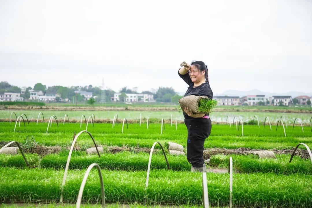 農耕知時節:谷雨潤稻田,春耕插秧忙