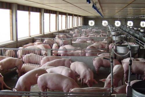 宜阳县亚联娱乐种猪育种有限公司韩城年出栏13万头育肥猪建设项目首次环境影响评价信息公开