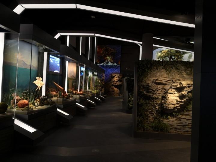 精建于心 经典在行 │公司监理项目湖北自然博物馆安吉馆荣获全国博物馆十大陈列展览精品