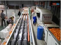 宜昌新豐機電三通道重量分級機
