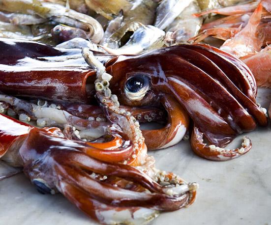 全球今年魷魚產量持續走低,價格繼續飆升
