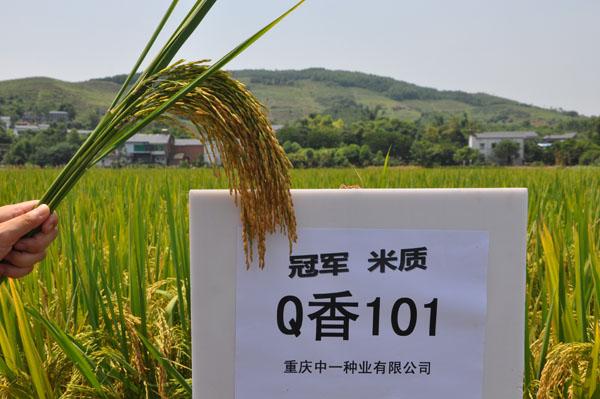 Q香101