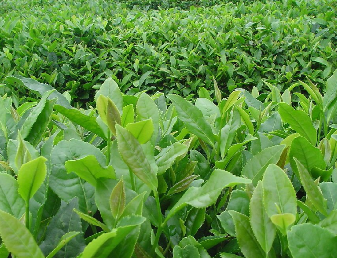 中國農業的出路:從1.0向4.0演進