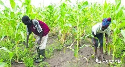 Angolan Tax Authority cuts profit tax on agricultural companies