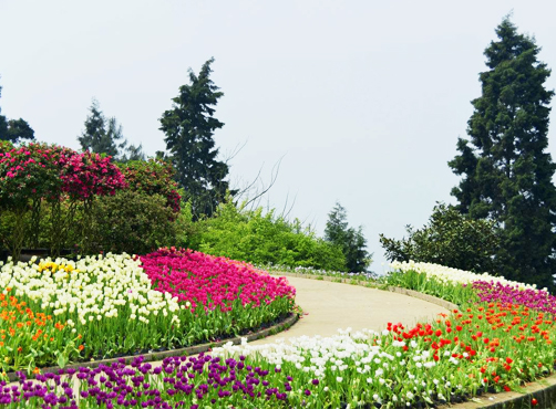 智能温室-花卉大棚-连栋温室