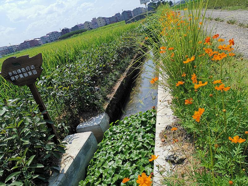 金华市婺城区下杨村农田氮磷生态拦截沟渠工程