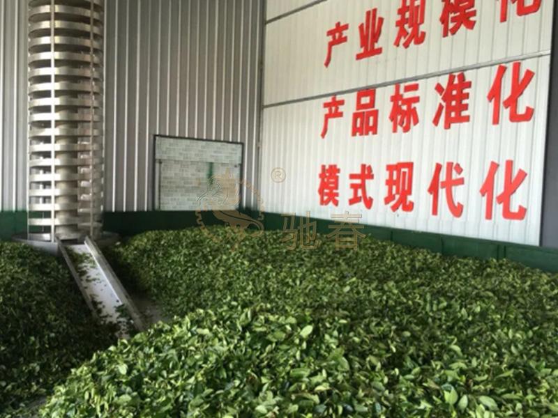茶葉流水線設備