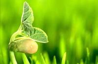 农业部关于进一步加强农药管理工作的意见