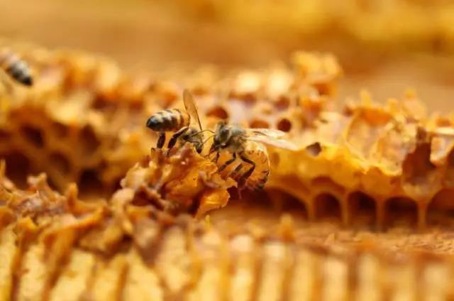 部分蜜源植物開花泌蜜習性!