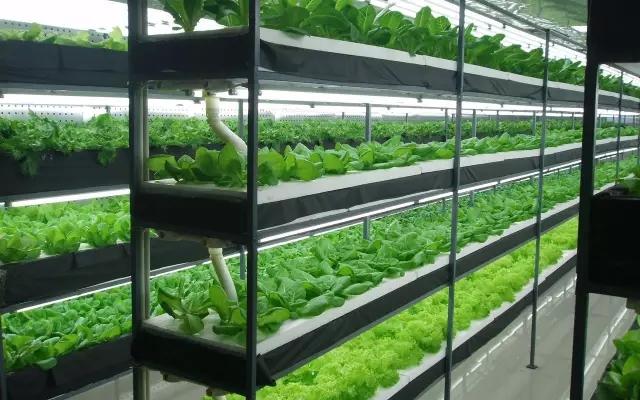 脫水蔬菜的市場現狀分析