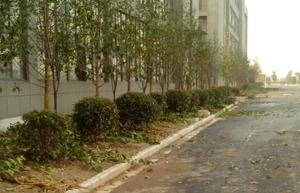 江北孵化園區綠化工程