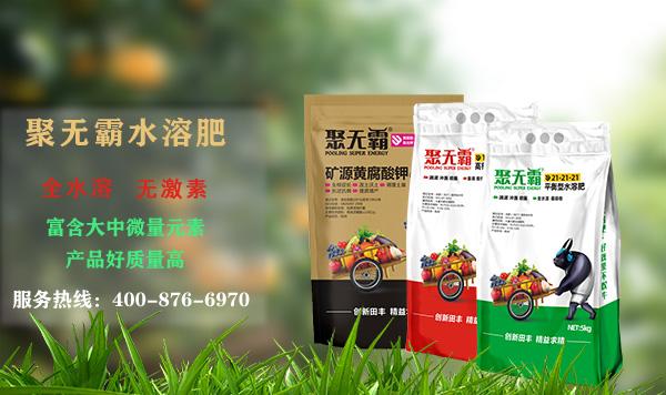 【大姜栽培技術】大姜后期用什么肥好?大姜施肥全程