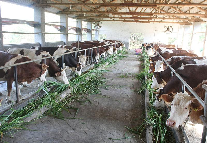 歐洲奶農積極響應歐盟牛奶減產計劃