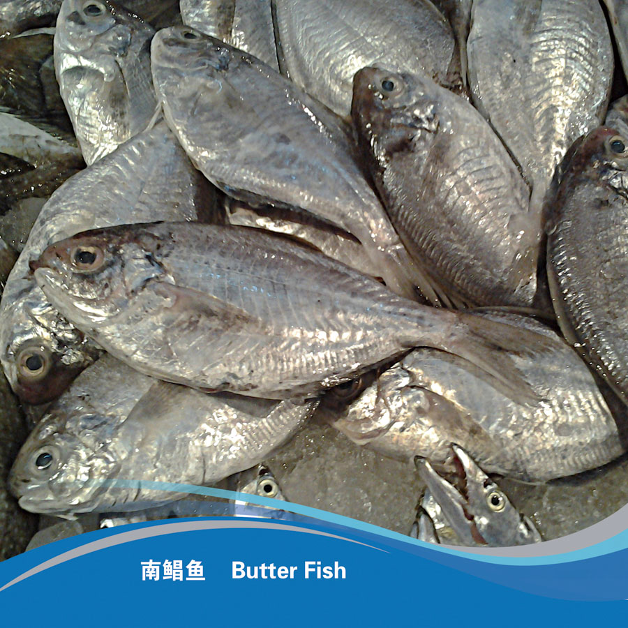 Butter Fish