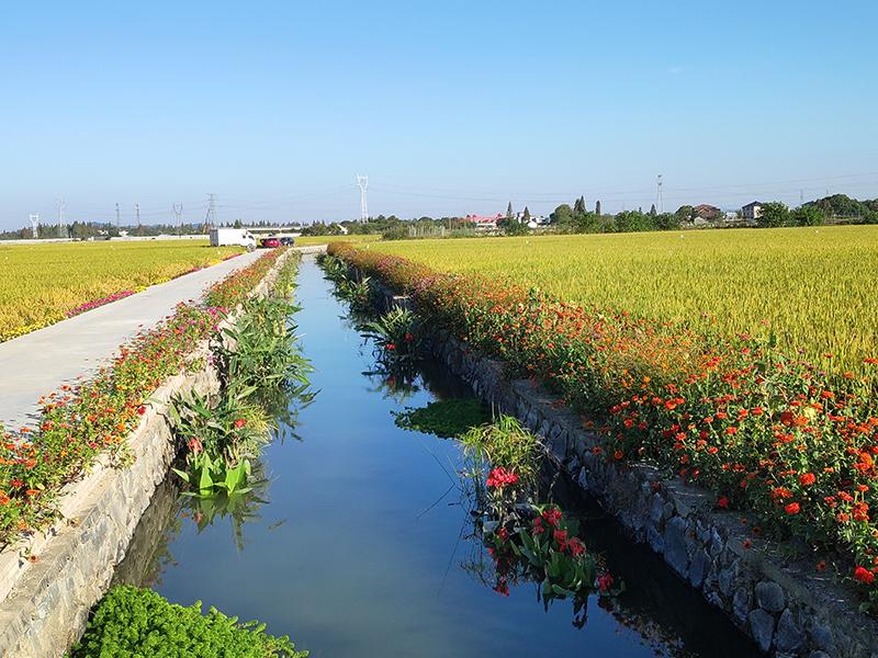 杭州市余杭区径山镇前溪畈农田氮磷生态拦截沟渠建设工程