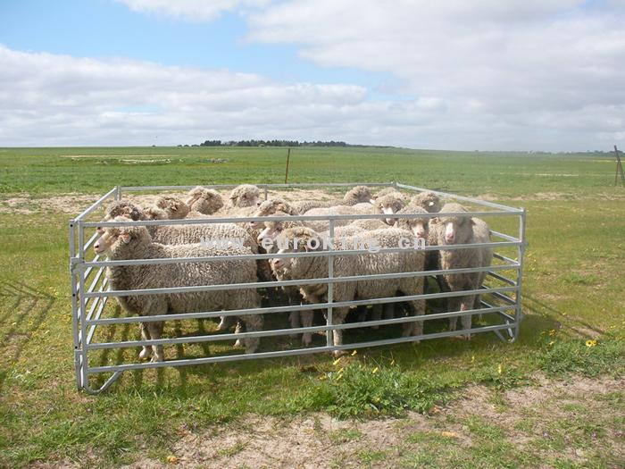 Portable Sheep Yards Panels Mongolia Style