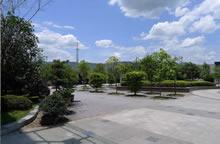 工程案例廣場綠化