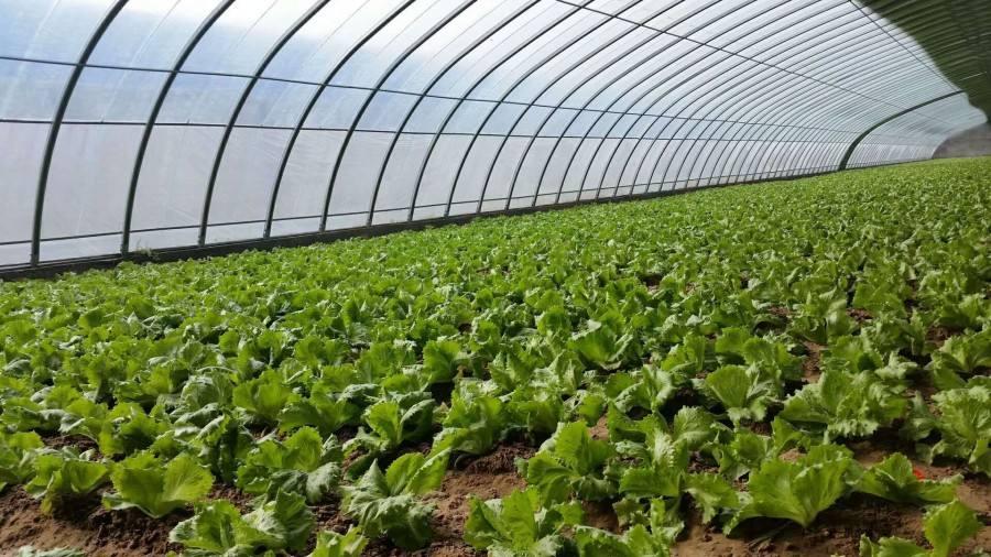 蔬菜大棚建設對光照條件的選擇