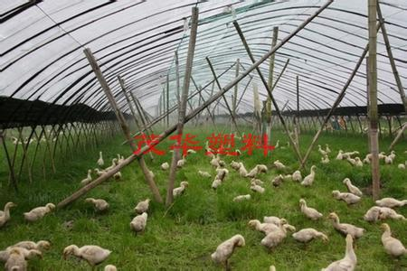 茂华塑料-养殖专用膜