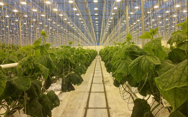 脫水蔬菜行業如何避免重金屬雷區?