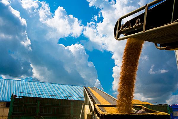 機械化糧食儲備庫區糧食傳輸設備