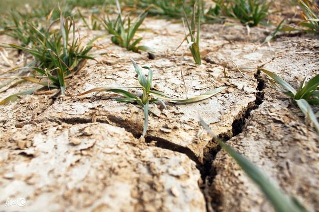 土壤问题八字真经!