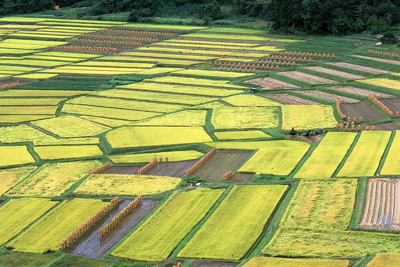 章貢區2015年農業綜合開發土地治理項目