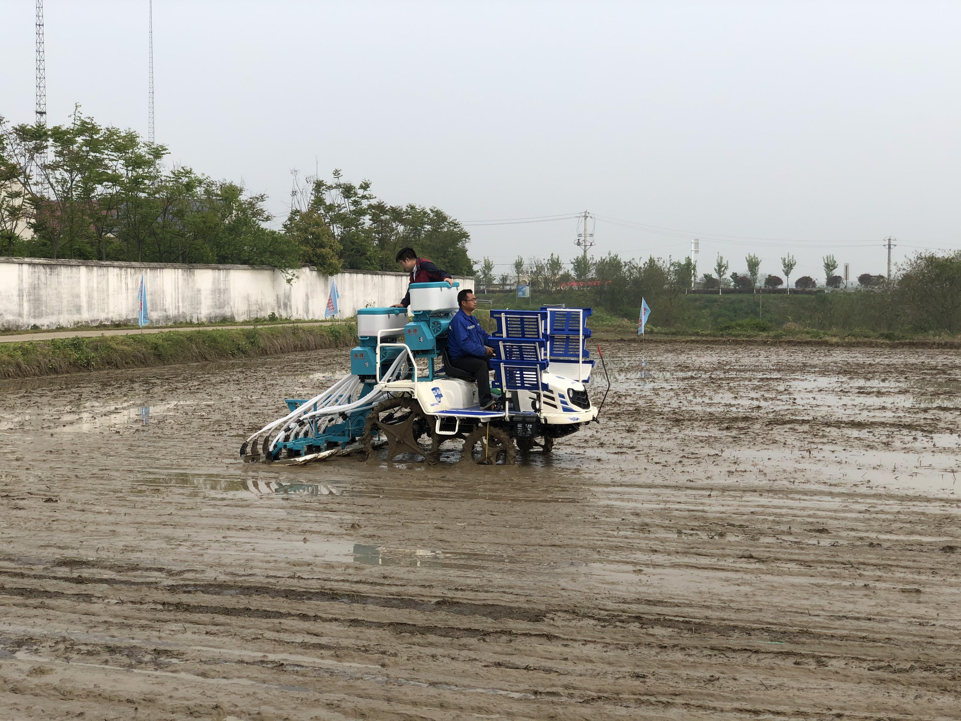 水稻侧深施肥,节本增效利环保
