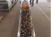 宜昌新豐機電桃子重量分級機