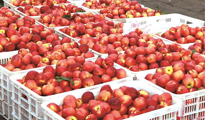 新星果品市场