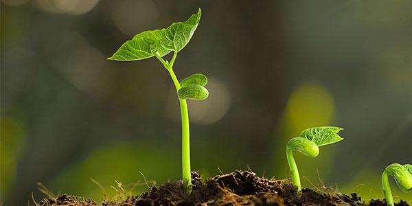 腐植酸水溶肥+菌肥+微量元素肥