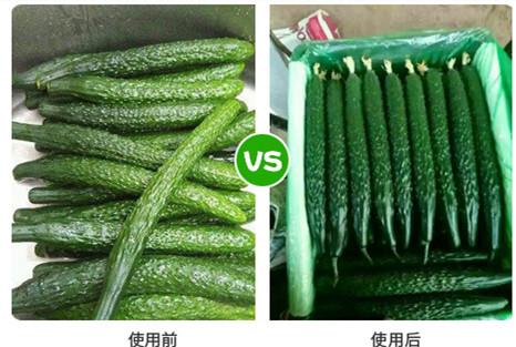 【黃瓜高產施肥方案】黃瓜花期沖什么肥?黃瓜結果期施什么肥好?