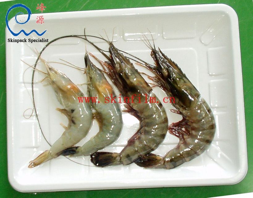 Sample- shrimps 2_副本