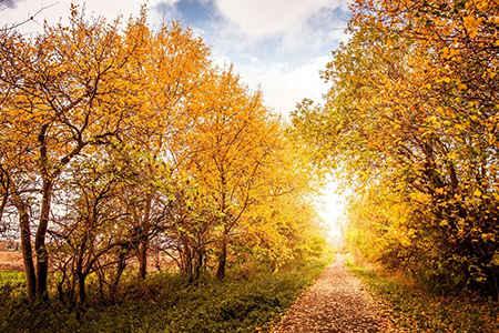 秋季調好心情防早搏