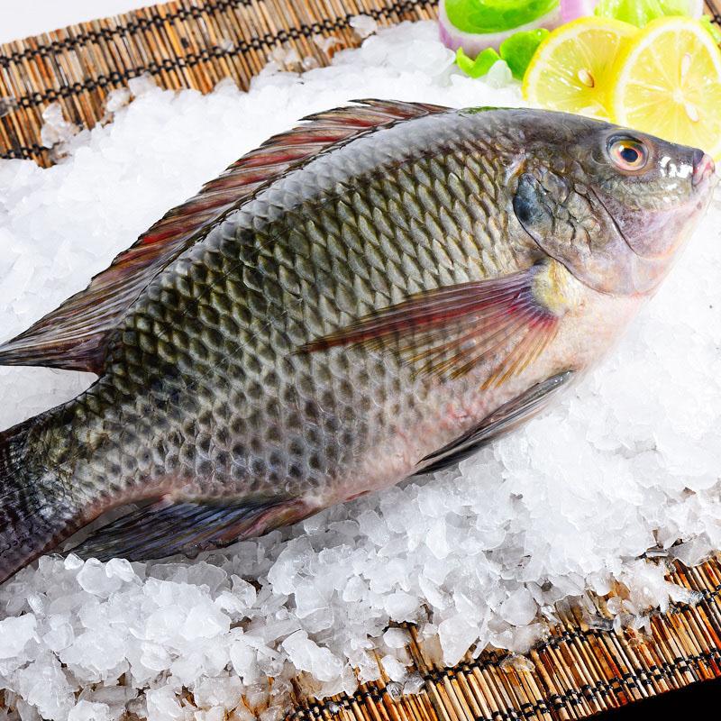 羅非魚系列