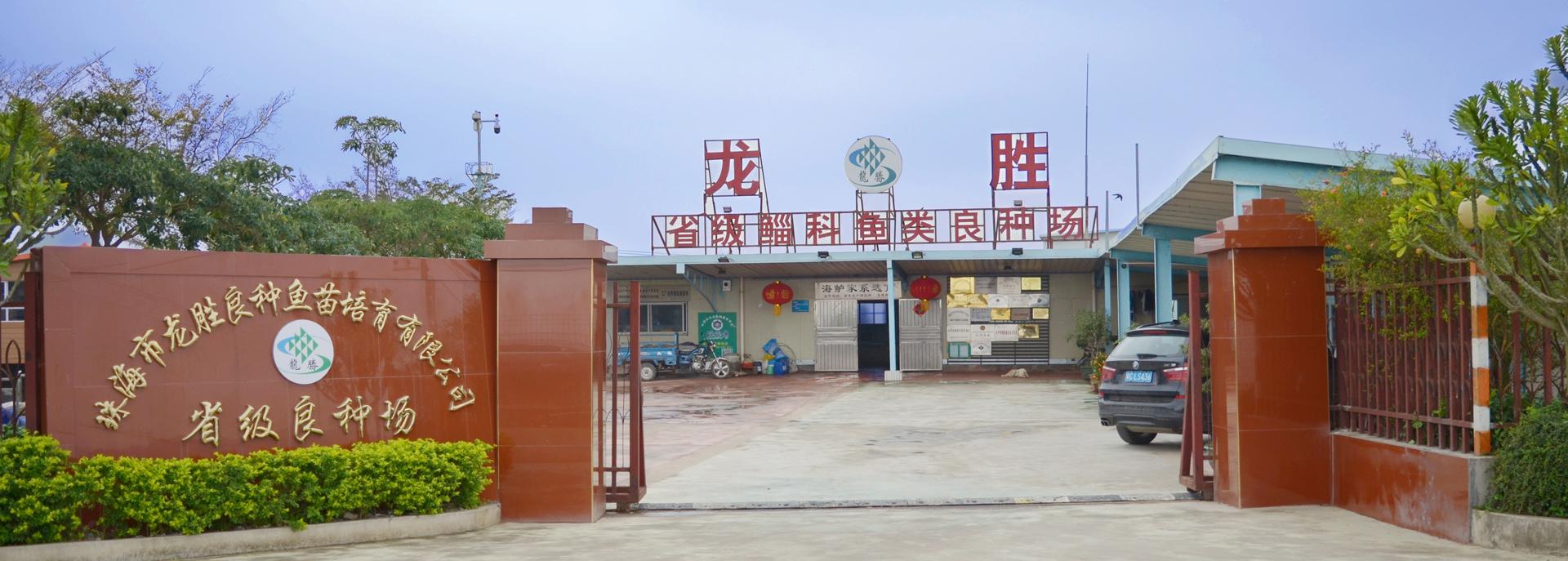 珠海市龙胜良种鱼苗培育有限公司