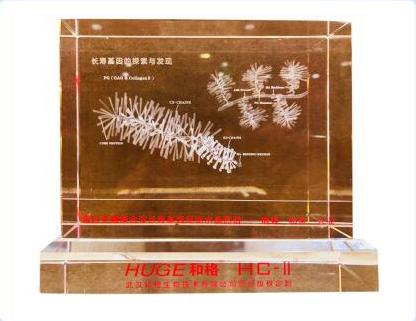 重磅首发:蛋白多糖聚合体长寿基因水晶3D图谱国礼
