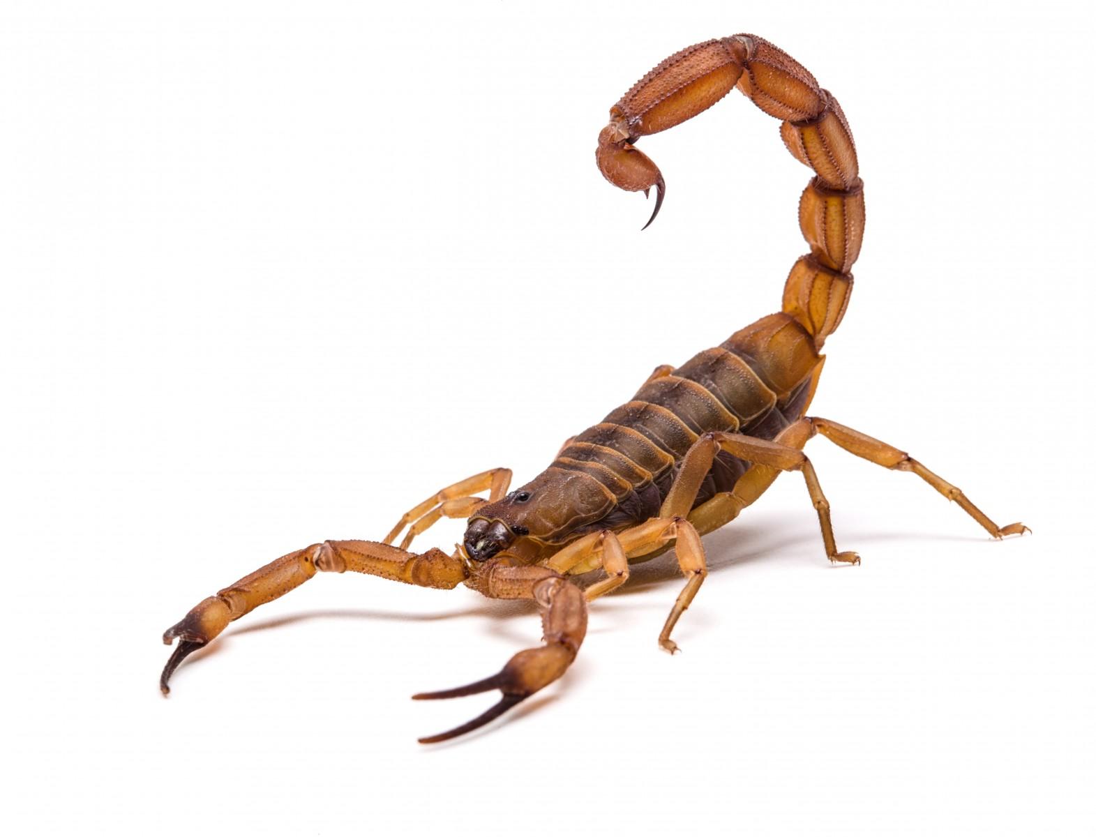 """談""""蝎""""色變?能靶向神經膠質瘤的熒光分子探針"""